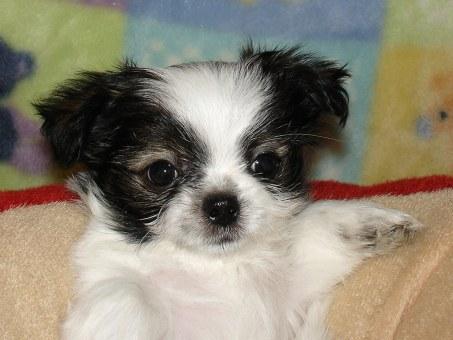 Pippin at 7 weeks