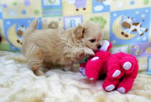 Bitty B enjoys her toys