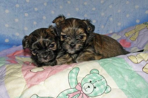 Brothers Lancelot & Galahad at 4 weeks