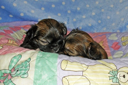 Sleeeping Brothers Lancelot & Galahad