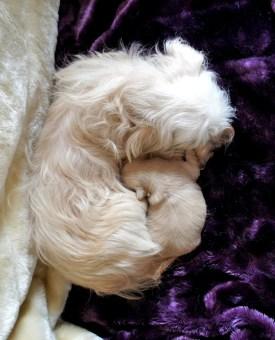 Buttercup & her puppy, Sweet Serendipity