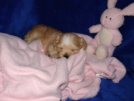 Buttercup's puppy at 3 1/2 weeks