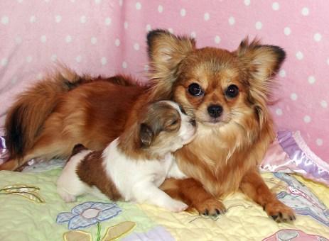 Cinnamon & her baby Chloe