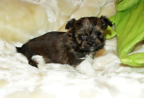 Cooper at 4 weeks