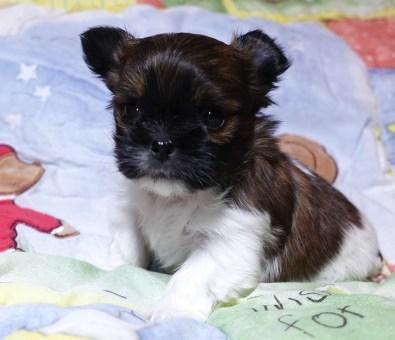 Ludwig at 4 weeks