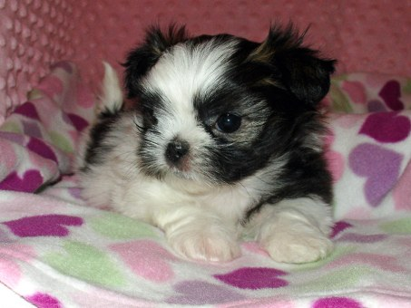 Lali at 5 weeks