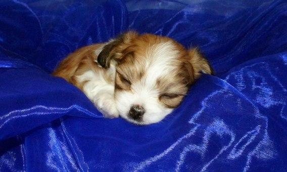 Sleeping Ringo