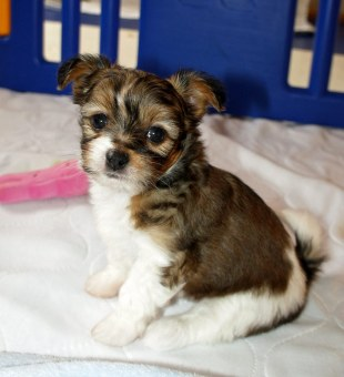 Archie at 6 weeks