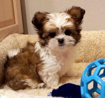Cooper at 8 weeks