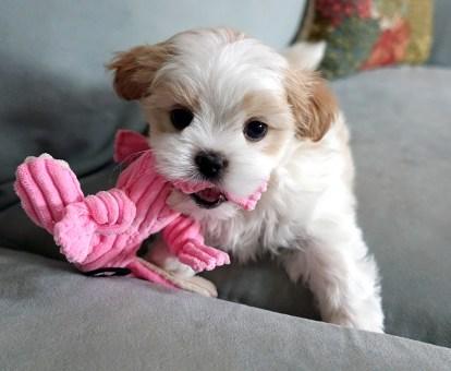 Daisy 6 weeks
