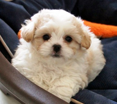 Pippin at 6 weeks
