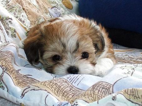 Jasper at 6 weeks