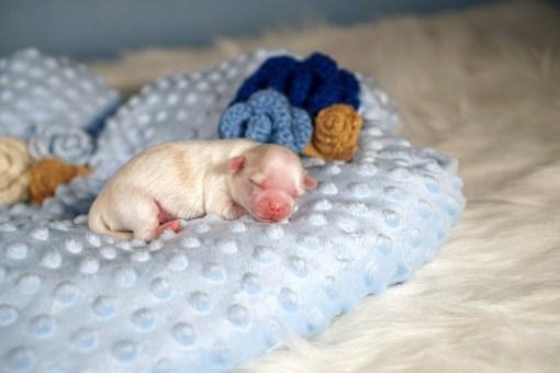 Olympia Newborn
