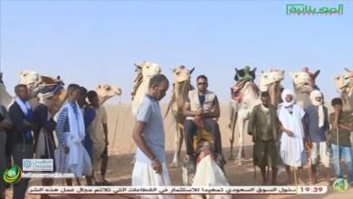 Photo of سباق الإبل او اللز أحد اهم الرياضات التقليدية في موريتانيا – تقرير متالي الصادق للثقافية الموريتانية