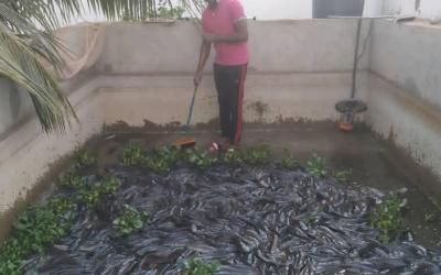 Pisciculture : la nouvelle vie de Thiam Abou, employé dans une banque malienne