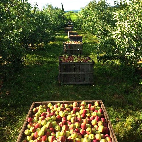 Near Me Farm Fresh