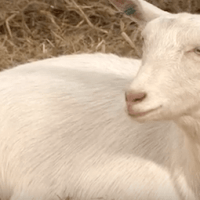agriculture films by bellyflop tv