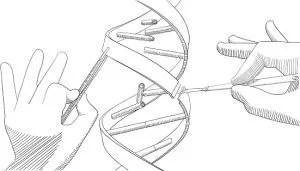 Gene editing technology may produce arthritis vaccine