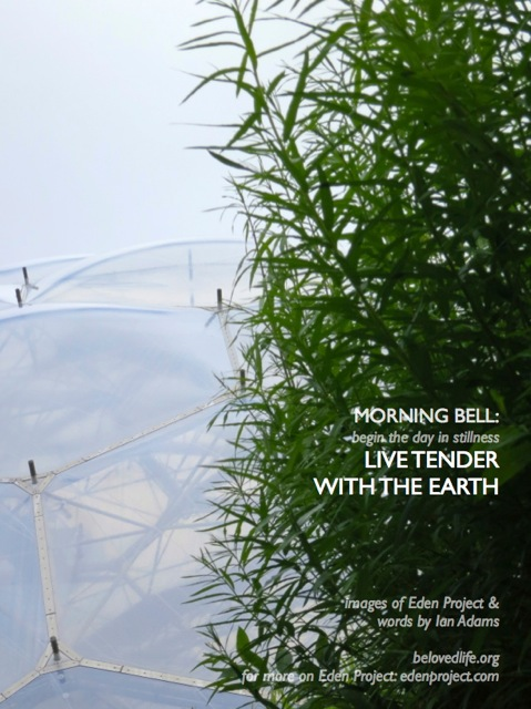 morning bell: live tender with the earth