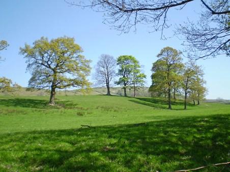 Thrushcross Park