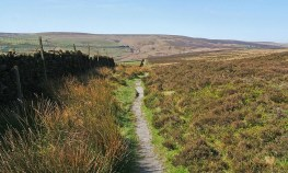 Path onto the Moors