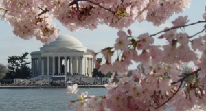 cherry_blossom_fest_jefferson_background_1