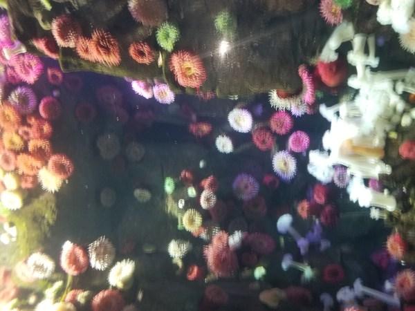 Anemones photo by Belynda Wilson Thomas