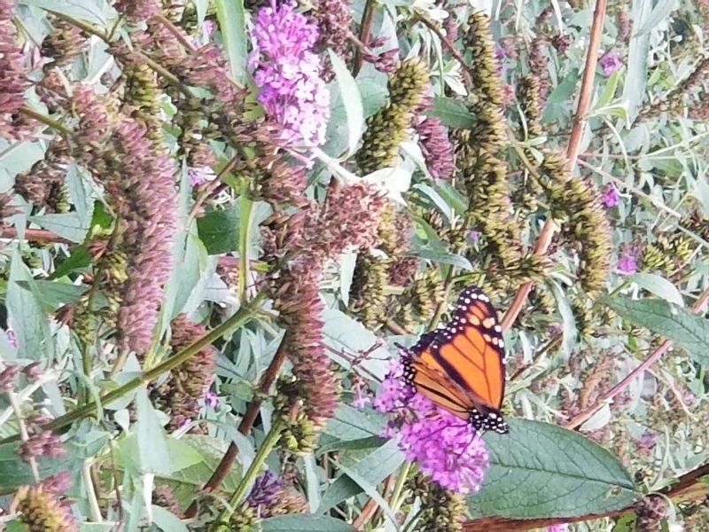 Spiritual Awakening - Photo of Butterfly by Belynda Wilson Thomas