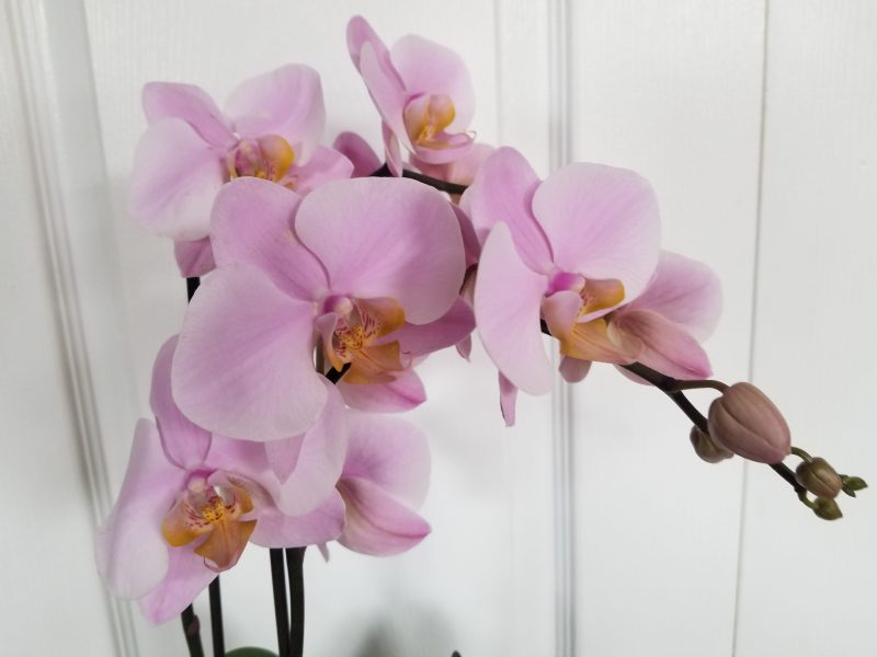 Missing The Mark photo of Daniela's orchid by Belynda Wilson Thomas