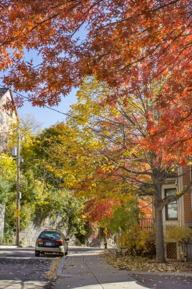 Colorful trees on Wensley Street in Boston