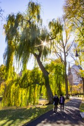 Sunny day in the Public Garden in Boston