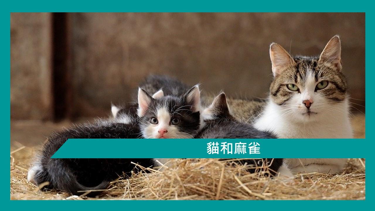 【勵志文章】貓和麻雀   香港郵輪愛好者 及 Ben 哥哥有話兒