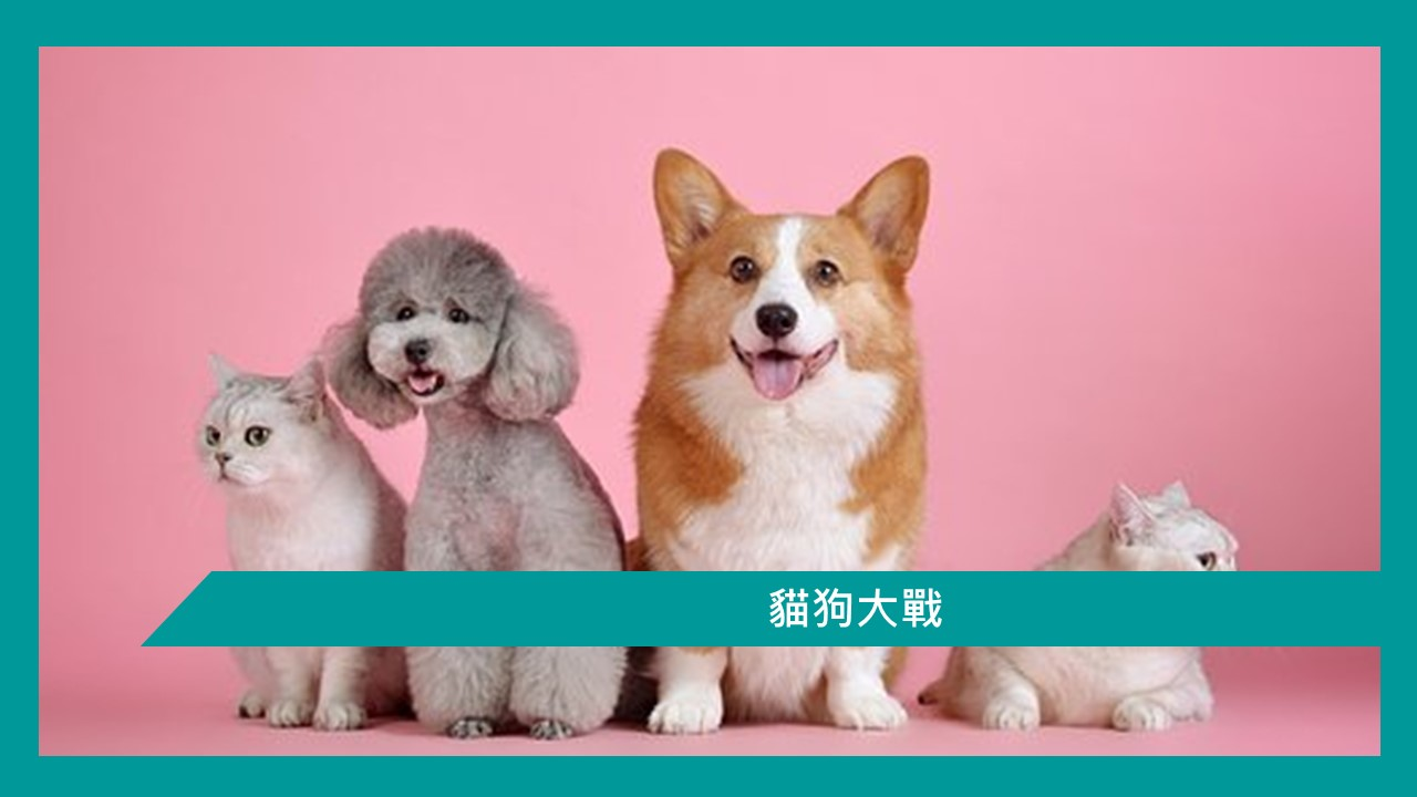 【貓狗大戰】 | 香港郵輪愛好者 及 Ben 哥哥有話兒