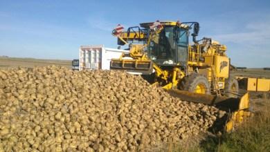 Photo of Azucarera finaliza la liquidación a los remolacheros por un importe superior a los 27 millones de euros