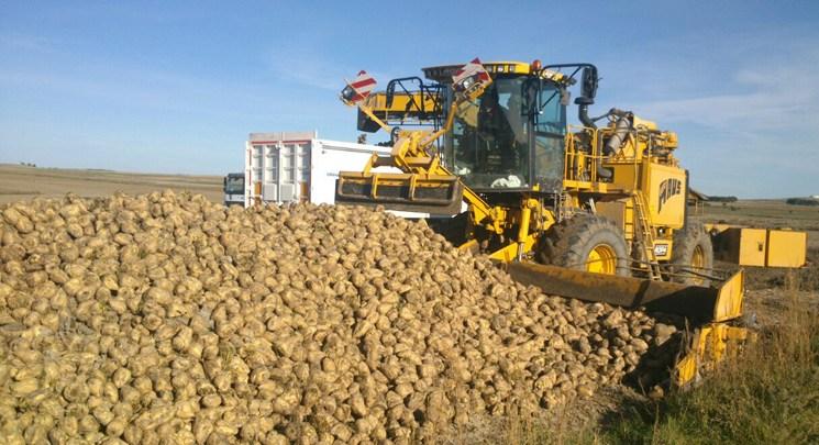 Photo of La Junta abonará a los agricultores por la ayuda a la remolacha de tres euros por tonelada