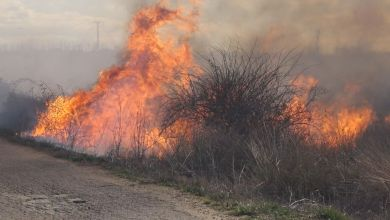 Photo of El TSJCyL desautoriza la quema de rastrojos en Castilla y León