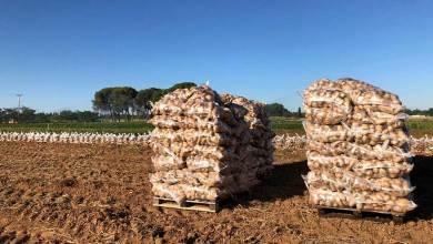 Photo of Preocupación entre los productores por el precio de la patata