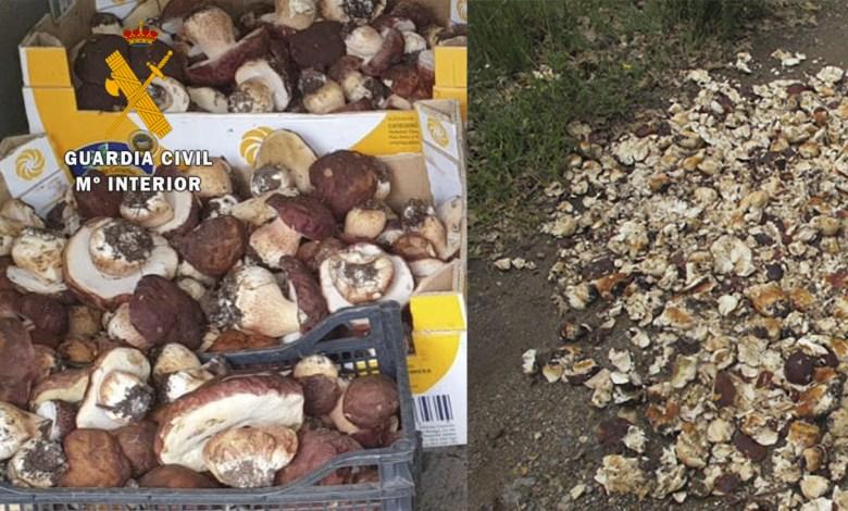 Photo of Sancionan a 11 personas en Sanabria por recolectar 100 kilos de setas