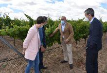Photo of La DOP Los Valles de Benavente recibirá de la Junta 1.300 euros por hectárea para la compensación por pérdida de ingresos