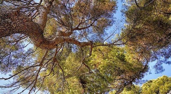 Photo of Castilla y León, líder en gestión forestal sostenible