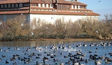 Photo of Las Lagunas de Villafáfila abren de nuevo al público este viernes