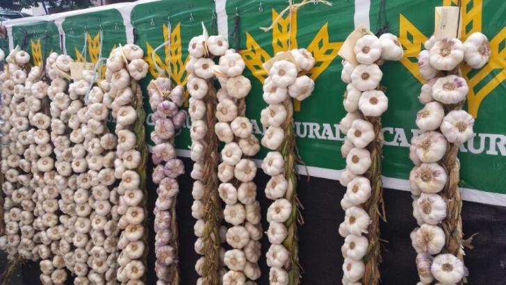 Photo of La Feria del Ajo contará este fin de semana con 114 puestos en el recinto ferial de IFEZA