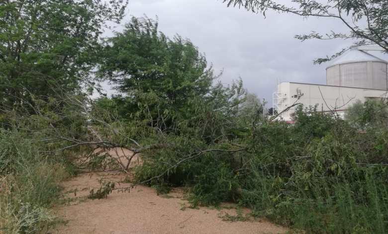 Photo of Las fuertes tormentas de esta tarde derriban un árbol en la Vía Verde