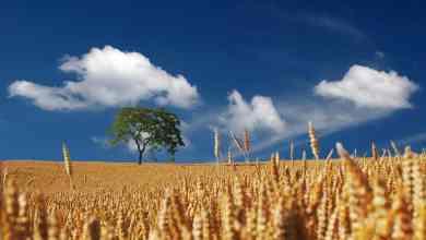 Photo of La Junta impulsa la sostenibilidad de las empresas del sector agroalimentario y su capacidad de adaptación al cambio climático