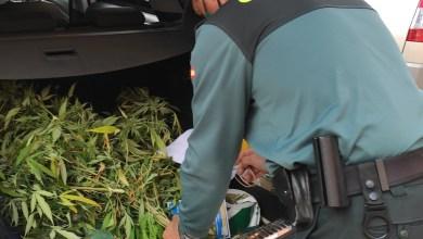 Photo of Detienen a cuatro personas e investigan a otras seis por el cultivo y trasformación de marihuana en localidades próximas a Zamora