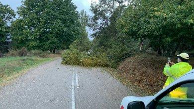 Photo of El temporal provoca el corte de la carretera de Trefacio de Sanabria a Pedrazales por la caída de un árbol
