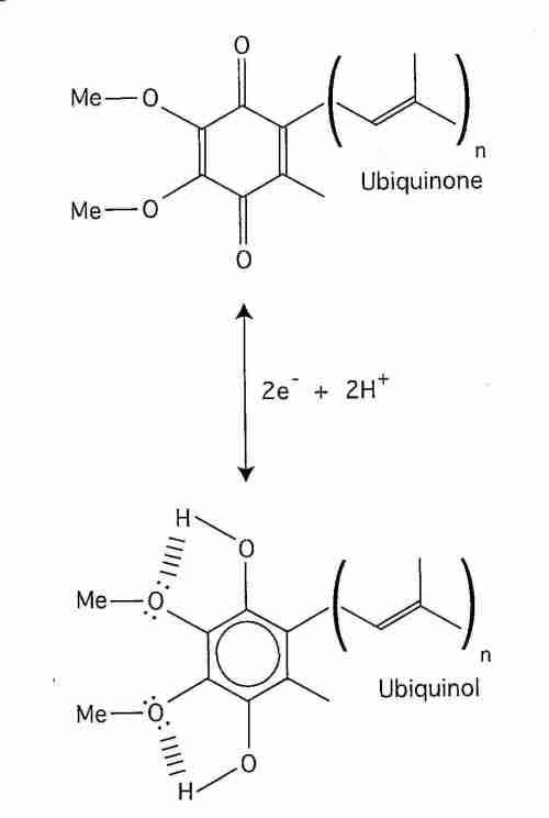 small resolution of coq10 redox reduction oxidation
