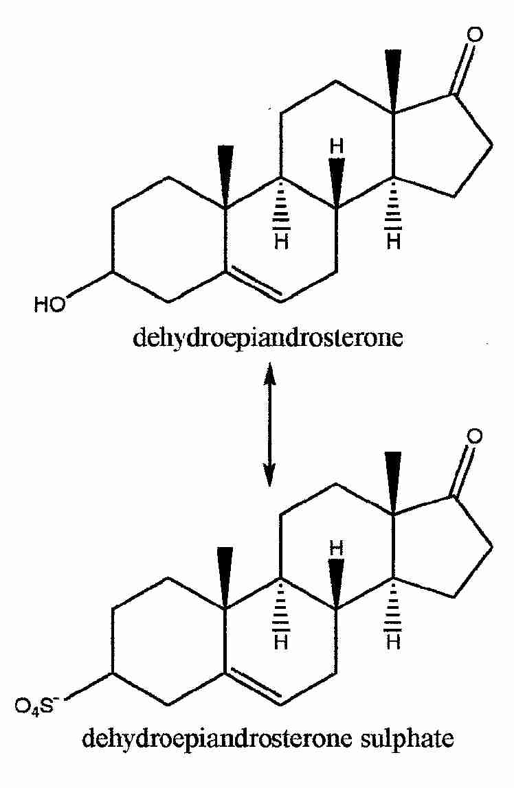DHEA HORMONE REPLACEMENT