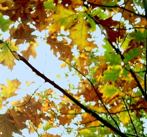 Leaves that are browning when it isn't autumn? That's Leaf Scorch