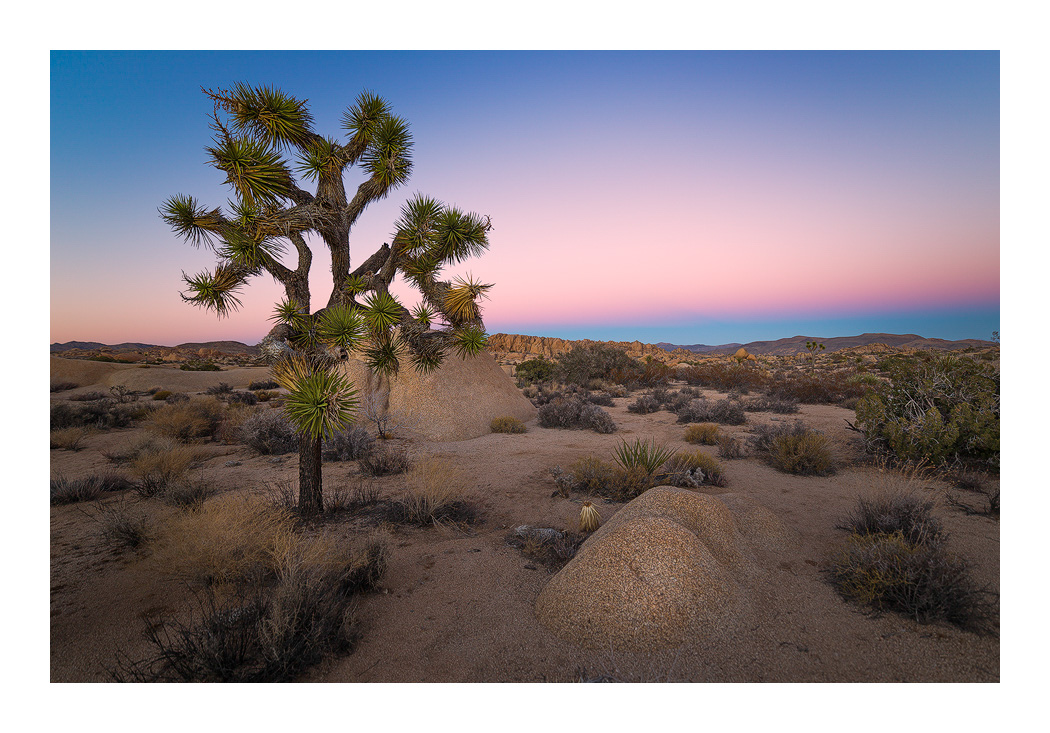 Joshua-Tree-Venuss-Belt-1-blog-2.jpg